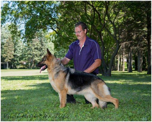 Riverrock German Shepherd Dogs Our Females
