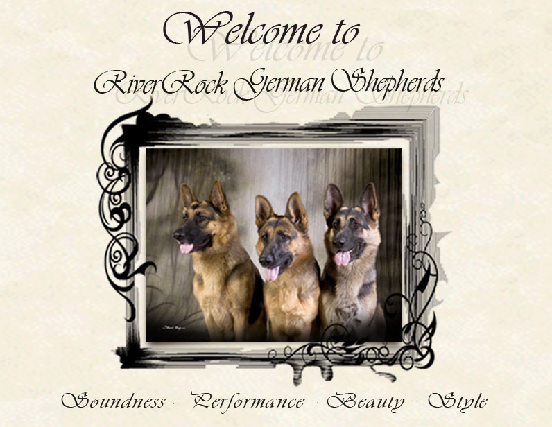 River Rock German Shepherd Dogs - St. Cloud Minnesota - Zoa Rockenstein - German Shepherd Dogs and Puppies